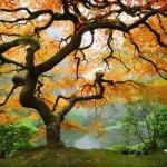 Японските градини