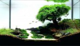 style-aquascape-designs-aquarium-unique-design-appartment-tanaman-dutch-style-aquascape-728x462